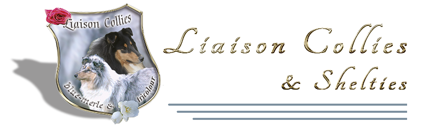 Liaison Collies & Shelties